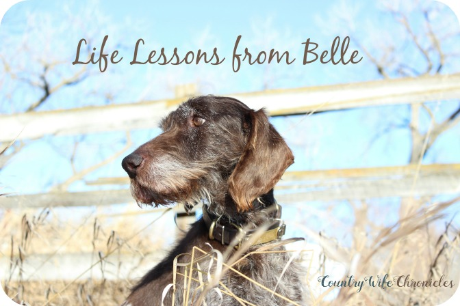 life lessons from Belle at Country Wife Chronicles