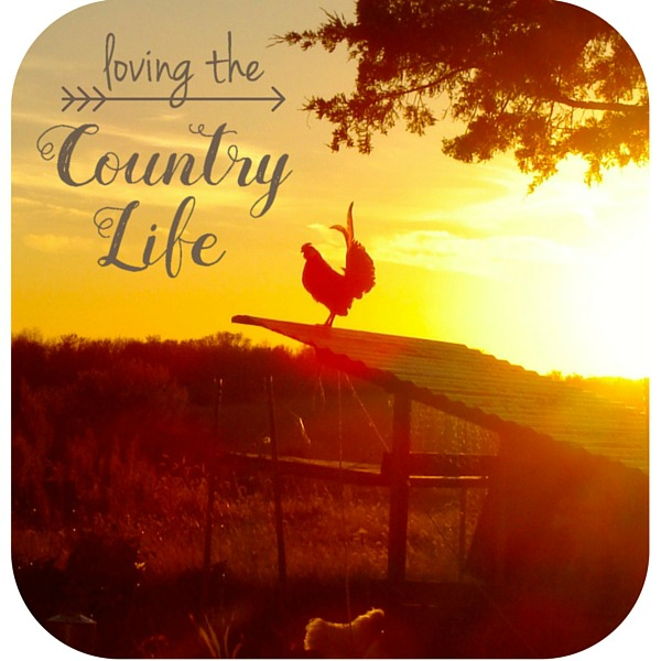 Loving the Country Life at Country Wife Chronicles