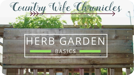 Herb Garden Basics Feature Photo